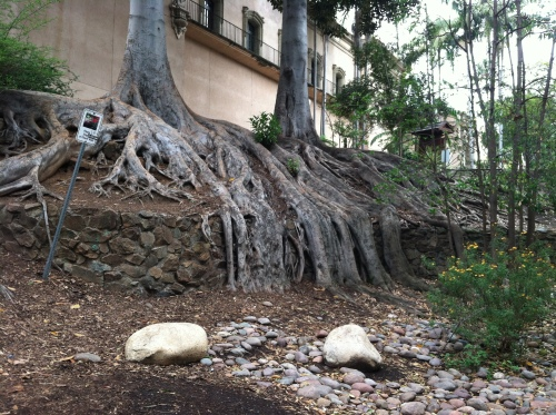 Roots overgrowing the Wall