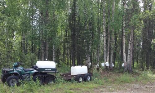 Birch Tree Tapping