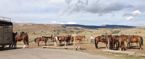 Horses Saddled Up and Waiting for the Trail Ride