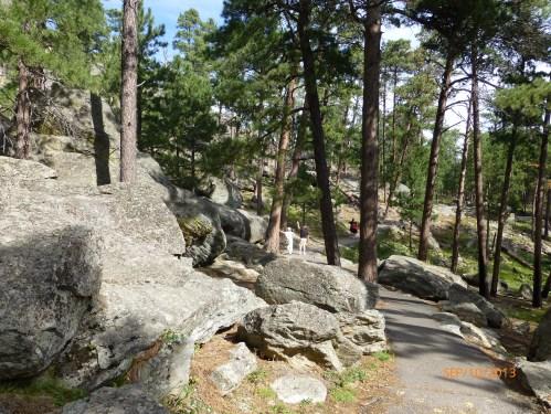 Walking Trail at Devil's Tower