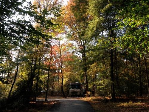 Greenbelt Park, #151