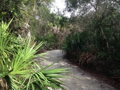Florida Panther National Refuge