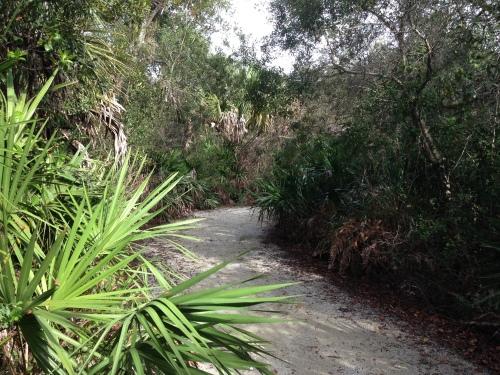 Florida Panther National Refuge