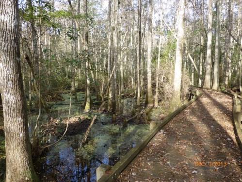 gum cyprus swamp