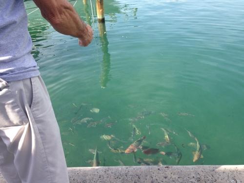 Bernie Feeding Fish