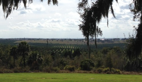 Overlooking Orange Groves