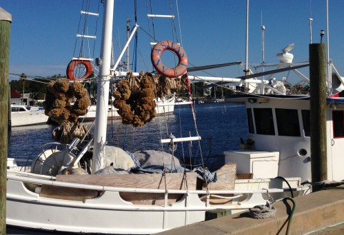 Sponge Harvest