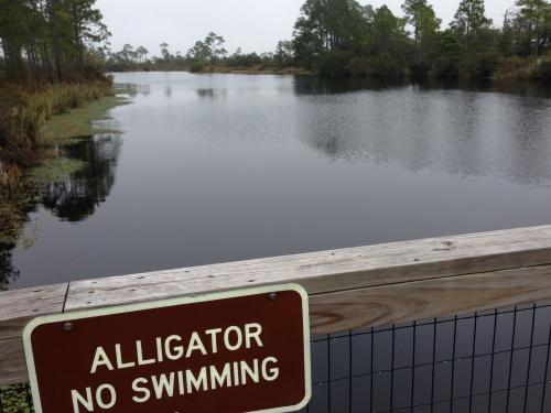 No Swimming Here