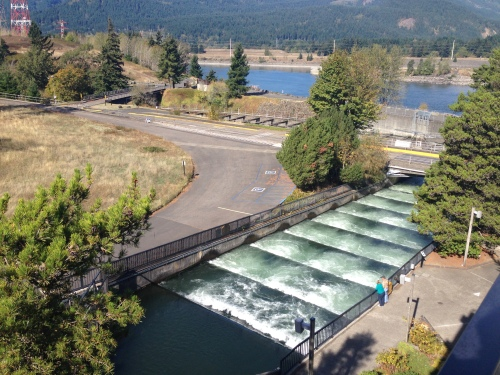 Fish Ladder at Bonneville Dam