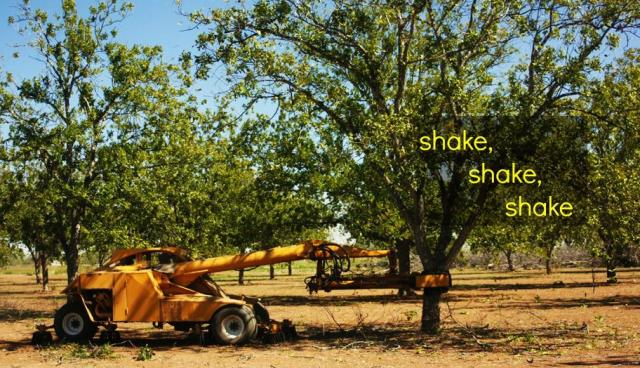 shaking_the_trees
