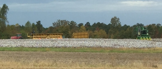 Cotton Picking!